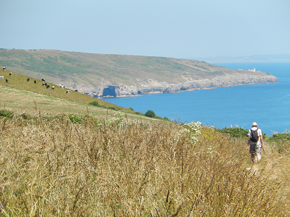 A delightful section of the Dorset Coastal path.